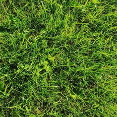 """GREEN #RELAXING #GRASS#naturephotography #nature #yoga www.frarina.com #sailing #sailingboat #sail #yacht #marina #photo #photography #instatravel #travelgram follow us! Hello there! I am Frank Cozzolino and with my beautiful girlfriend Marina we love to sail vlogging and documentary making. Together we founded our Youtube channel """"FRARINA"""" which is all about sport and outdoors activities and travel documentaries. Whereas FrancisCozzolino is my personal Youtube channel where I will post our…"""
