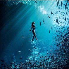 Cardume mar água