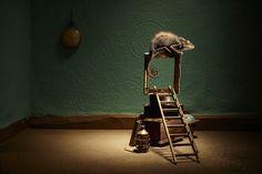 Eva Diez  www.evadiez.es Animal Photography, Ladder Decor, Table Lamp, Lighting, Home Decor, Fotografia, Table Lamps, Decoration Home, Nature Photography