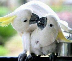 animal kisses - Bing Images Cute Animals Kissing, Cute Little Animals, Baby Animals, Funny Animals, Adorable Animals, Kissing Pics, Water Animals, Love Birds, Beautiful Birds