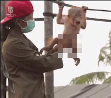 """""""ОБЕЗЬЯНКИ. БРАТЬЯ НАШИ МЕНЬШИЕ"""" Если мы действительно произошли от обезьян,…"""
