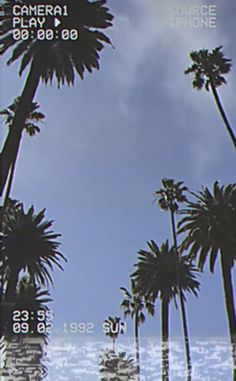 palm trees in california Usa Wallpaper, Live Wallpaper Iphone, Iphone Background Wallpaper, Live Wallpapers, Aesthetic Pastel Wallpaper, Aesthetic Backgrounds, Aesthetic Wallpapers, City Aesthetic, Travel Aesthetic