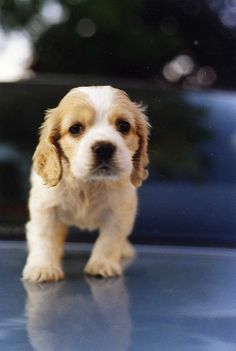 Cute puppy and dog - http://www.1pic4u.com/blog/2015/01/06/suesse-hundebabys-267/