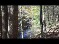 Bankhead National Forest in the Fall filmed in 4K UltraHD with Sony FDR-AX100.  Please share and enjoy my other backpacking videos too.
