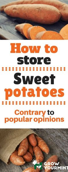 Knowing how to store sweet potatoes before even planting them can help you a lot since you will know what will be required. #potato#garden#gardening#growyourmint.com