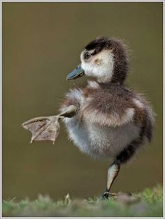 """Duckling:  """"You put your left webbed foot out; and you shake it all about..."""""""