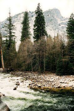 grafika nature, tree, and river