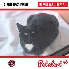 Cette Alerte (141257) est désormais close : elle n'est donc plus visible sur la plate-forme Petalert Suisse. L'émetteur de cette Alerte ne s'est plus manifesté, malgré nos relances. Merci pour votre aide. Visible, Aide, Cats, Animals, Switzerland, Thanks, Shape, Gatos, Animales