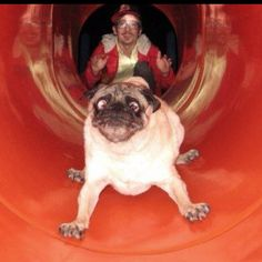 If someone pushed me down a slide I would make that face too!