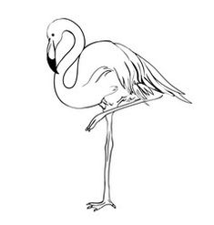totally free lovable flamingo bird sketch special : Flamingos are highly gregarious birds. Flocks numbering while in the thousands could remain visible in lengthy, leaning trip structures along with wad. Flamingo Logo, Flamingo Art, Flamingo Vector, Pink Flamingos, How To Draw Flamingo, Bird Sketch, Clipart Black And White, Silhouette Vector, Mural Art