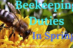 Beekeeping duties in the spring - Self Sufficient Sarah Growing Sprouts, Growing Microgreens, Self Sufficient, Raising Bees, Lip Balm Recipes, Homemade Lip Balm, Family Traditions, Bee Keeping, Queen Bees