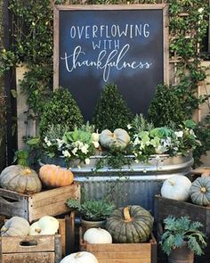 Feelings of gratitude abound. Magnolia Market's beautiful Fall pumpkin display in Waco, Texas.