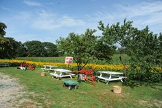 Water Mill - Farm Stand