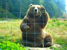 Waving Bear. How cute is this!  Just be sure to teach your children the difference between a trained bear and one in the wild............