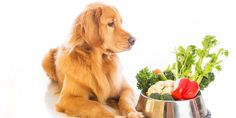 "Pretty cool read.  Is Raw Food Better for Your Dog or Cat?  Personally I think a mixture of raw food and commercially produced ""processed"" pet food works just fine.  That is my opinion and it works for us with our Golden Doodle.    http://mypawpad.com/Is-Raw-Food-Better-for-Your-Dog-or-Cat?"