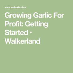 Growing Garlic For Profit: Getting Started • Walkerland