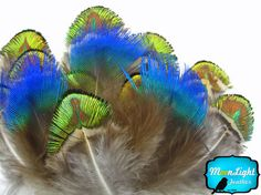 Small Peacock Feathers, 2 Dozen - Iridescent BLUE and GREEN/GOLD Peacock Plumage Loose feathers : 469