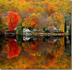 fall colors - Google Search