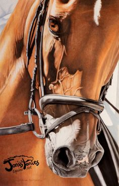 """Art ~ """"Dressage And Details"""" ~ By Jonies Ponies ~2010 WWHSA Handbook Cover ~  People's Choice Award for the Horse in the Art Exhibition at the Seippel Homestead and Center For the Arts.~ 6th Place Ex Arte Equinus International Equine Art Competition."""