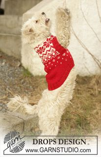 Knitted DROPS dog coat in Karisma with traditional Norwegian pattern. Free knitting pattern by DROPS Design. Knitting Patterns For Dogs, Jumper Patterns, Knitting For Kids, Knitting Designs, Free Knitting, Drops Design, Knit Dog Sweater, Dog Sweaters, Christmas Jumpers