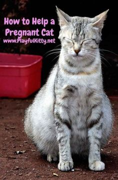 Do you have a pregnant cat? There's no need to panic. Keep reading to learn how you can help your cat through her pregnancy and the 3 stages of labor.