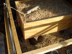 Raising and Harvesting Broiler Chickens | Peak Prosperity