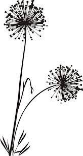 """Képtalálat a következőre: """"dandelion draw"""""""