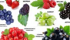 Wszystko o witaminie c kwas askorbinowy – dawkowanie, najlepsze źródła, korzyści, przeciwwskazania. – Motywator Dietetyczny Kiwi, Blackberry, Fruit, Food, Essen, Blackberries, Meals, Yemek, Rich Brunette