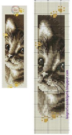 Kitten (no key)