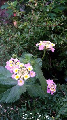 Το Φθινόπωρο ανθίζουν...  τα πιο όμορφα λουλούδια!!!!!!!!!