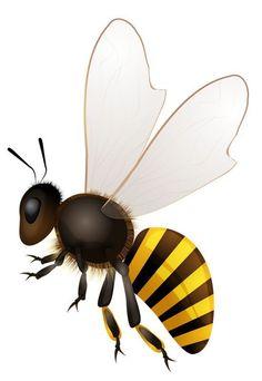 Resultado de imagem para cartoon insect flying png