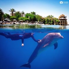 Heaven on Earth @dolphin_reef_eilat