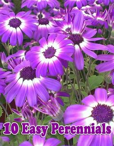 Considering the many benefits of starting perennials from seed, it seems foolish not to do it. Seed is economical, and in short order, you can produce flats of plants that would cost hundreds of dollars to purchase retail, which is great if you have a large or new garden or are on a tight budget...
