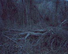 Anna Collette Untitled (dark landscape #40), 2008 Dark Landscape