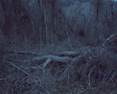 Anna Collette Untitled (dark landscape #40), 2008 Dark Landscape