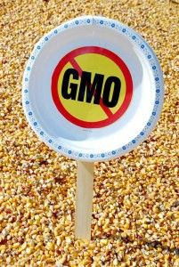 The evidence against eating GMO foods for good health is mounting.....I always avoid GMO foods when I can.