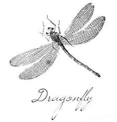 Vintage Dragonfly Printable - facilisimo.com