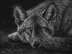 Hudozhnitsa-Cristina-Penescu.-Grattazh-Coyote.-9x12-dyuymov