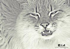 Miao! by Enea H. Medas  on 500px