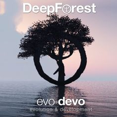 Sit back, relax and contemplate life while listening to Deep Forest's upcoming record 'Evo Devo'.