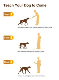 [PINDESCRIPTION] Dog Training @ https://www.youtube.com/watch?v=zW0HD30lfcY #pets #dogs #animals