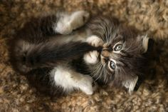"""""""My cat speaks sign language with her tail."""" --Robert A Stern"""