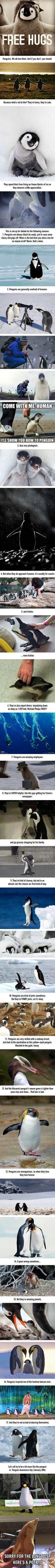 17 Reasons To Celebrate Penguin Awareness Day