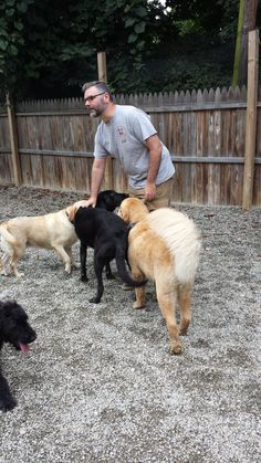 Sitters and furbabies playing together