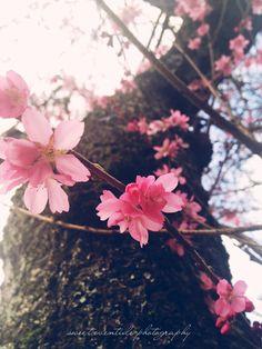 Spring Cometh by Jessica Nichols