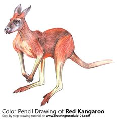 Red Kangaroo with Color Pencils [Time Lapse]