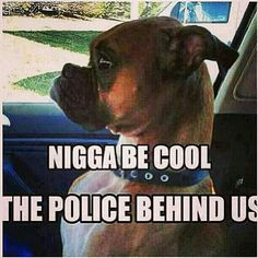 Haha be cool its the PoPo! Can't Stop Laughing, Laughing So Hard, Ghetto Red Hot, Boxer Love, Have A Laugh, Just For Laughs, Laugh Out Loud, Puppy Love, I Laughed