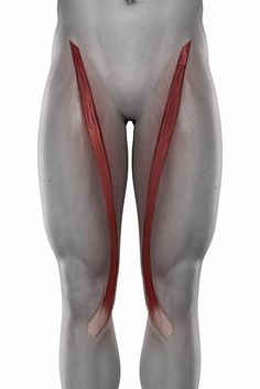 hip problems, movement dysfunction, glute activation, hip injury, hip joint