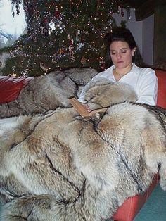 """Coyote Fur Blanket 54"""" x 66"""""""