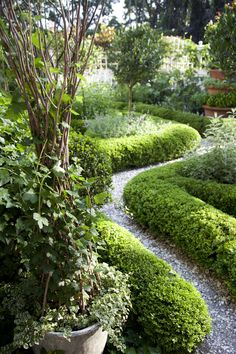Boxwood hedges—whether rounded, squared off, or snaked through other borders—can add charm to any country garden. To see six more features every country garden needs, check out an excerpt from Charlotte Moss' book Garden Inspirations.